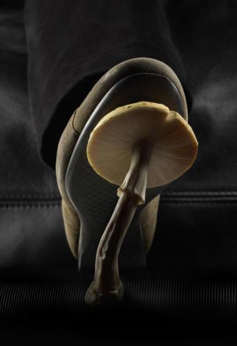 Appuyer sur le champignon (1)
