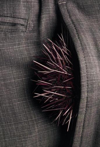 Avoir des oursins dans les poches (1)
