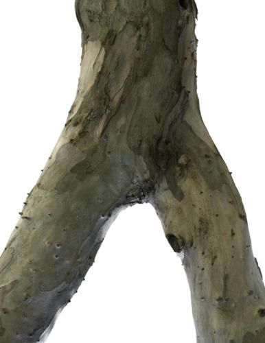 Corps en bois 6