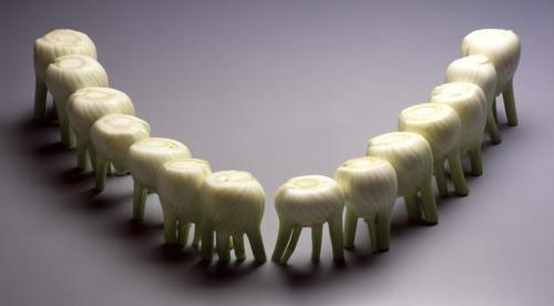 Dents Fenouil (1) (1)