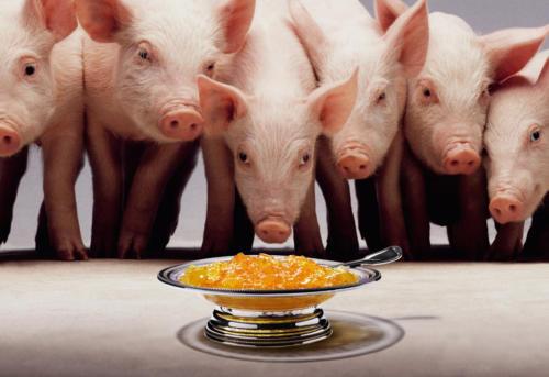 Donner de la confiture aux cochons (1)