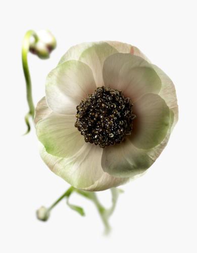 Fleur Caviar (1)