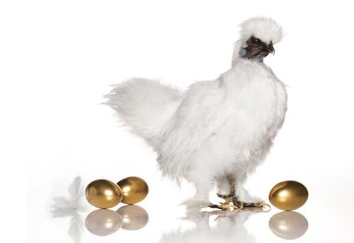 La poule aux oeufs d'or (1)