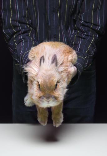 Poser un lapin (1)