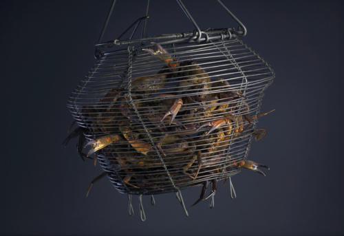 Un panier de crabes (1)
